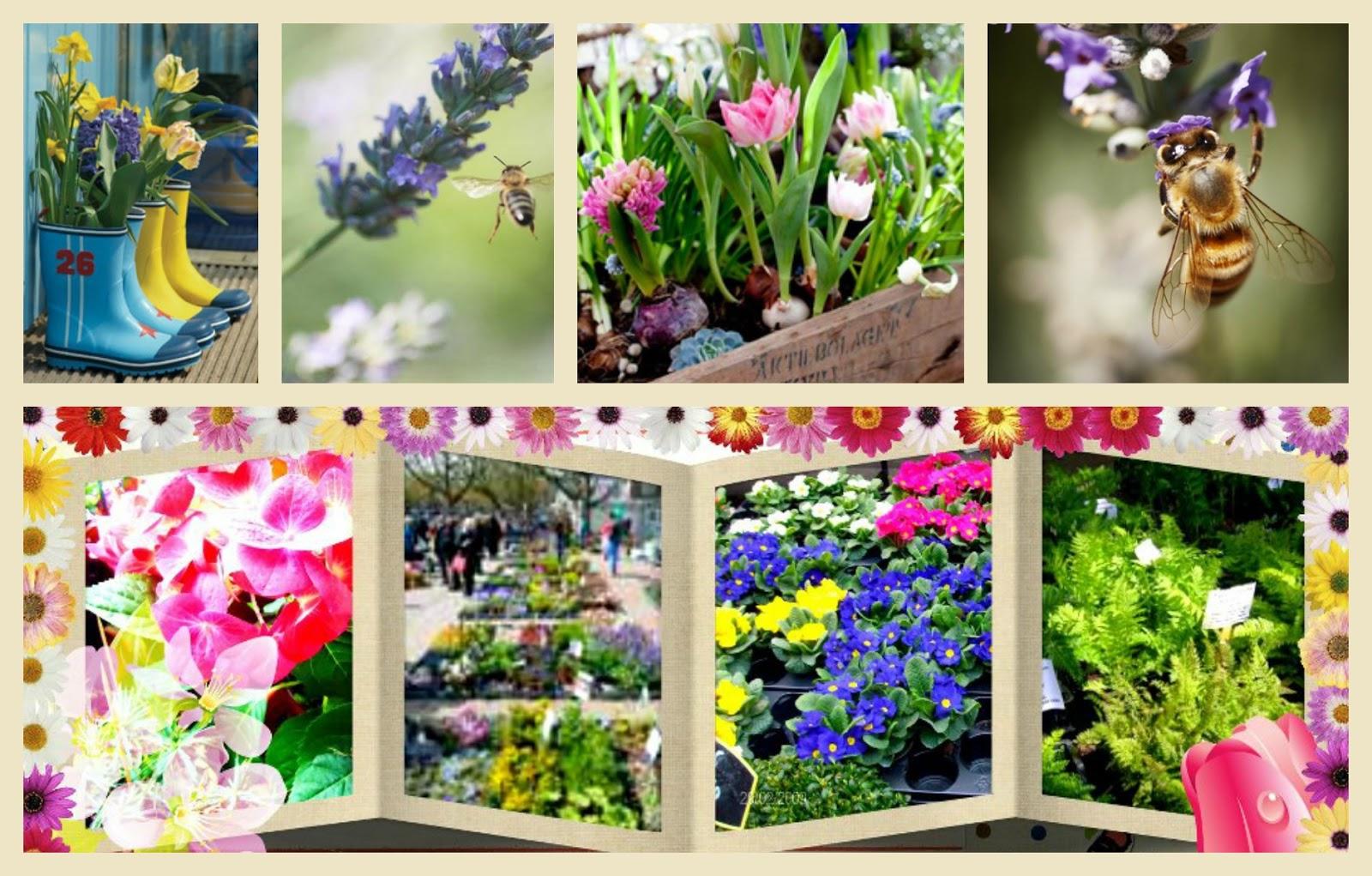 ✿⊱╮ AnMa ZiNe, een blog over alles wat groeit en bloeit: March 2013