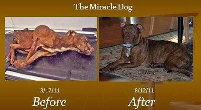 Emaciated & Dying Dog's Amazing Transformation