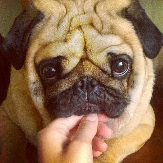 fotos de perros adorables