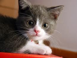 Anak kucing imut dan manis