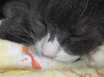 Buster napping on my old baby blanket :-)
