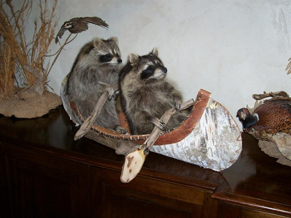 Pic Like The Way These Raccoons Have Been Captured Their