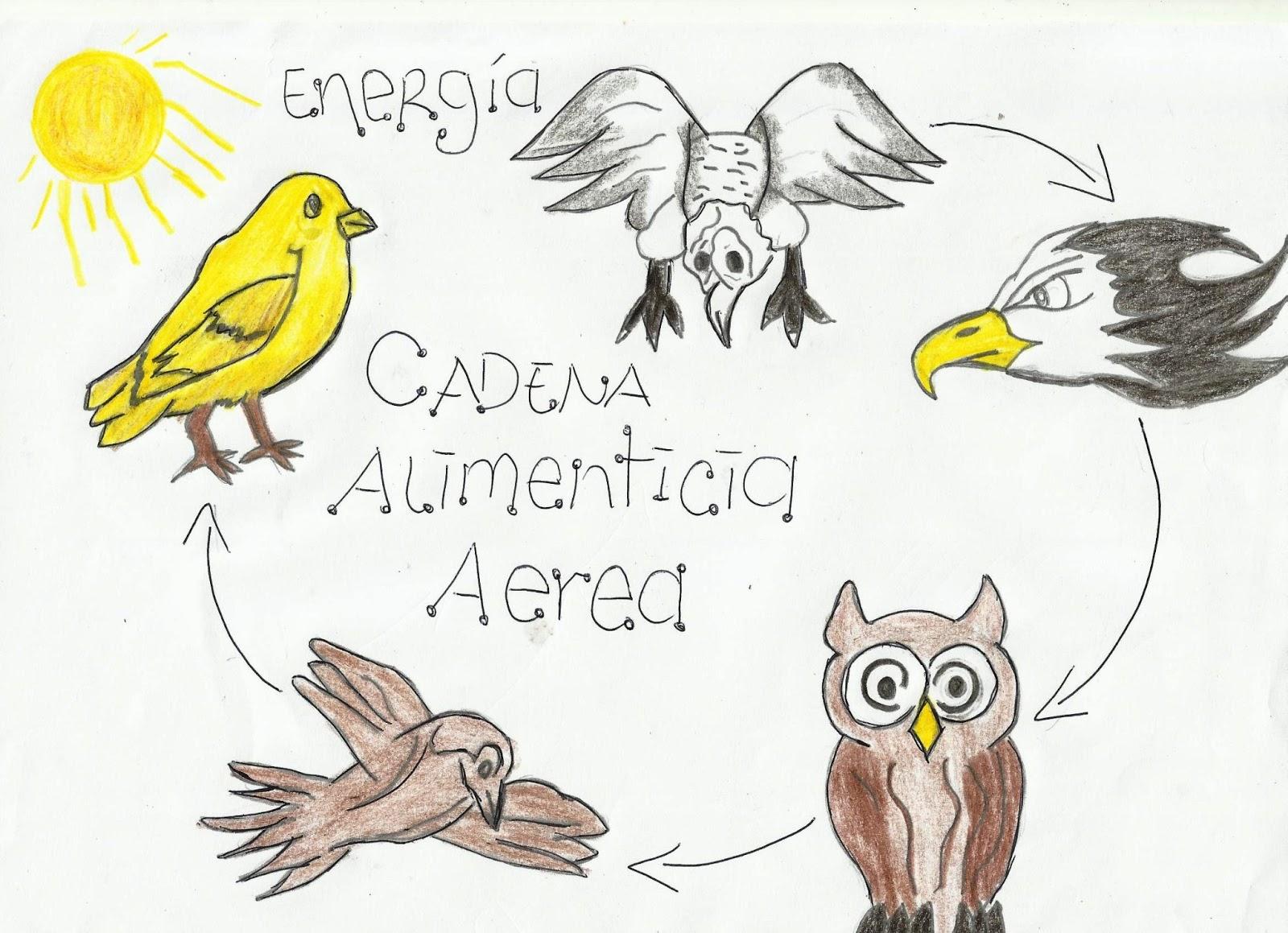CATEDRA DE BIOLOGIA: CADENAS ALIMENTICIAS