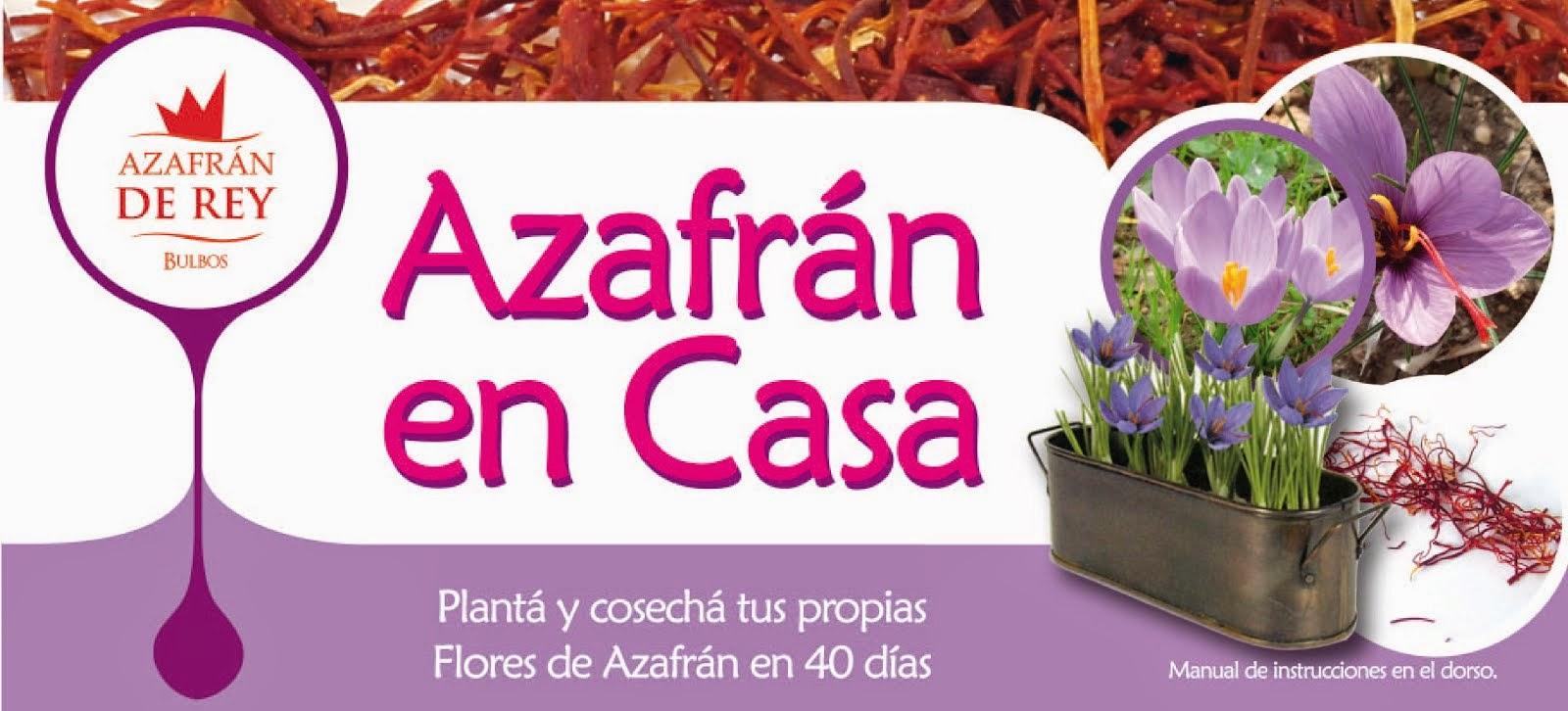 planta de azafran en maceta