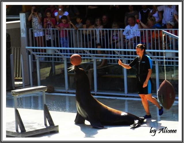 show-foci-zoo-Nyiregyhaza