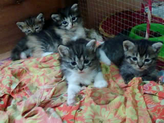 Tentang Blog gambar kucing imut