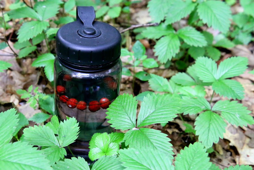 wild strawberry water