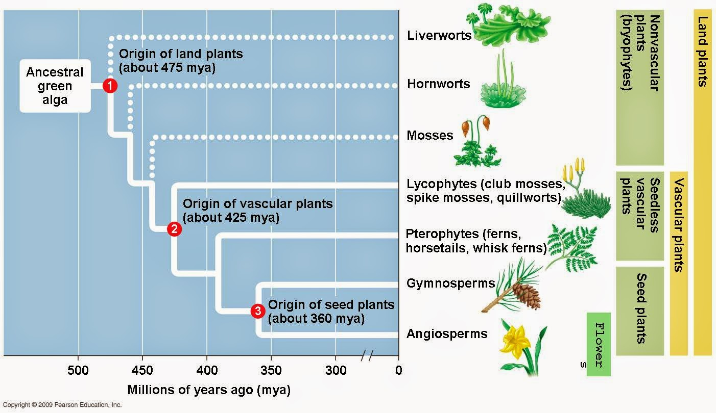 Odd organisms plant evolution seeds and pollen are key adaptions that improved the ability of plants to diversify in terrestrial habitats a seed consists of an embryo packaged with a pooptronica