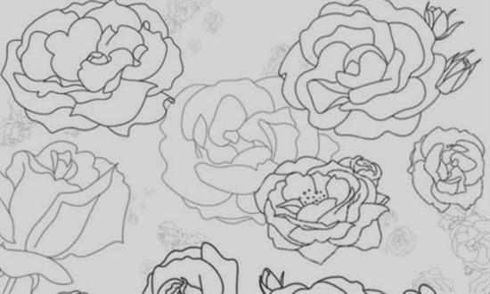 Photoshop Roses Brushes