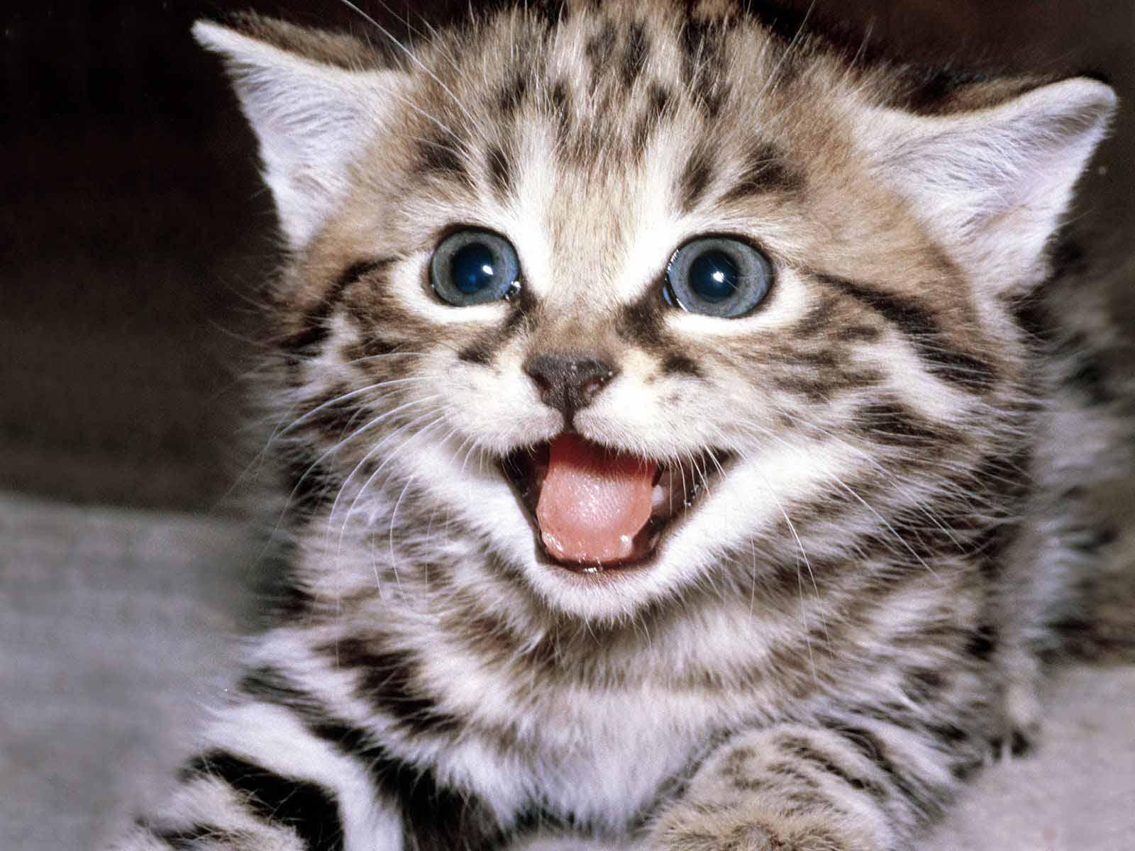 http://3.bp.blogspot.com/-4kBvHvCJnOY/T-iKBteyTKI/AAAAAAAABLw/CwDU11DBqWc/s1600/kitten.jpeg