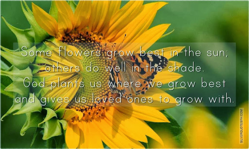 Some Flowers Grow Best In The Sun, Picture Quotes, Love Quotes, Sad Quotes, Sweet Quotes, Birthday Quotes, Friendship Quotes, Inspirational Quotes, Tagalog Quotes