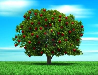 El fruto del buen rbol bosquejos cristianos - Cuando se plantan los arboles frutales ...