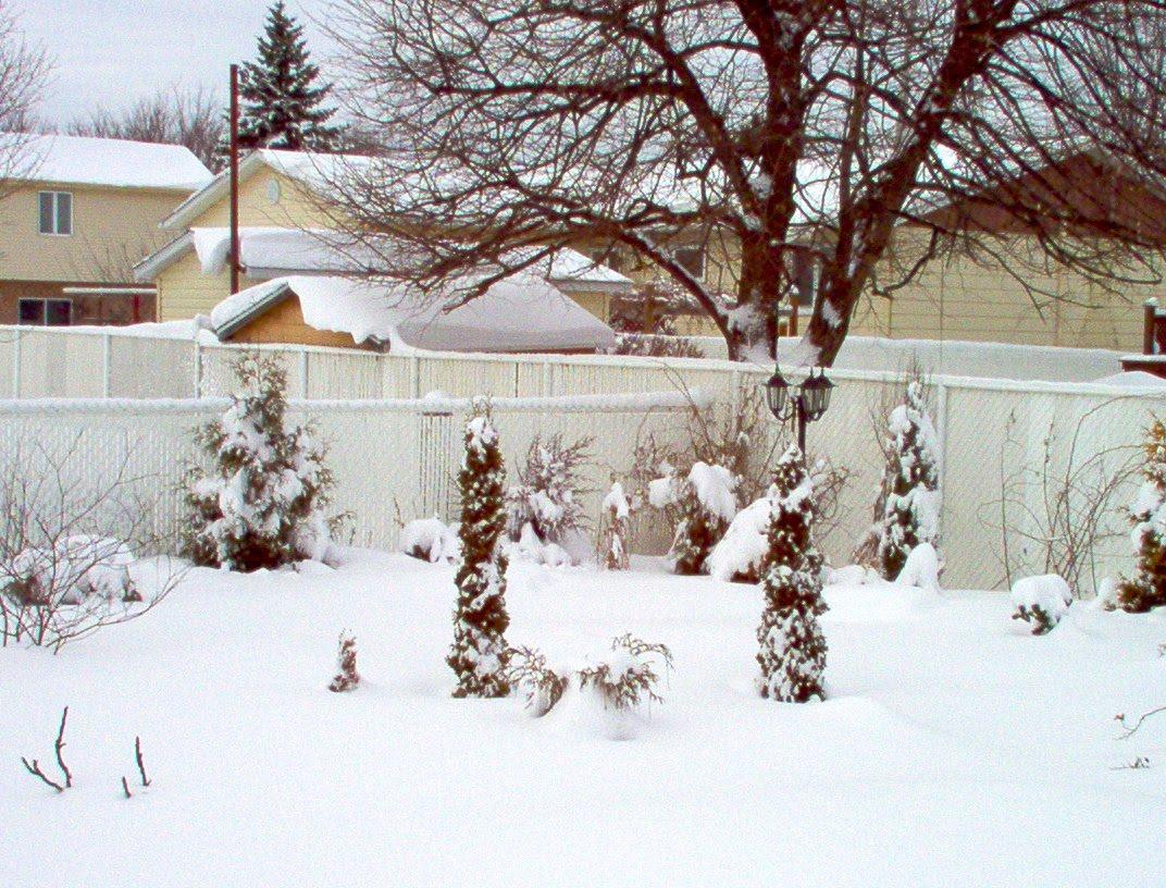 Au jardin de sue jardin d 39 hiver en hiver 7 mars 2011 for Hiver au jardin