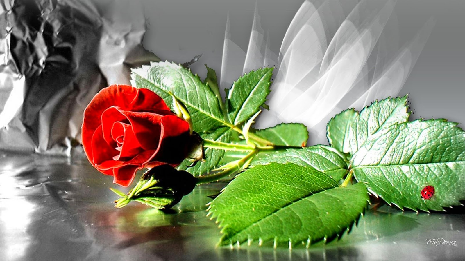 Flower Wallpapers Flower Pictures Red Rose Flowers Gifts