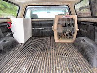 Two baby Nigerian Dwarf Goats in a dog crate in the back of a truck