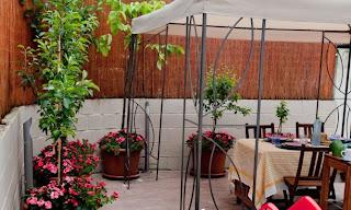 estilo y hogar rboles frutales peque os para terrazas o
