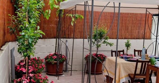 Estilo y hogar rboles frutales peque os para terrazas o for Arboles para macetas de exterior