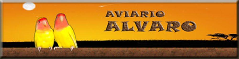 AVIARIO ALVARO
