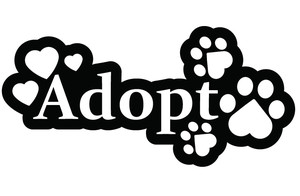 Click below to see our adoptable cats