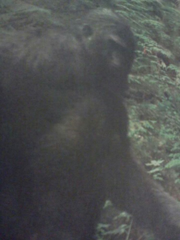 Daily 2 Cents: Probed by 'Communion' Entities -- Mississippi Bigfoot Stories -- Is it BF or BS?