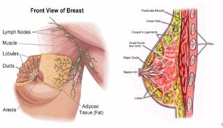 http://www.ramuankankerpayudara.com/2015/09/penyakit-kanker-payudara-peringkat-1-di.html