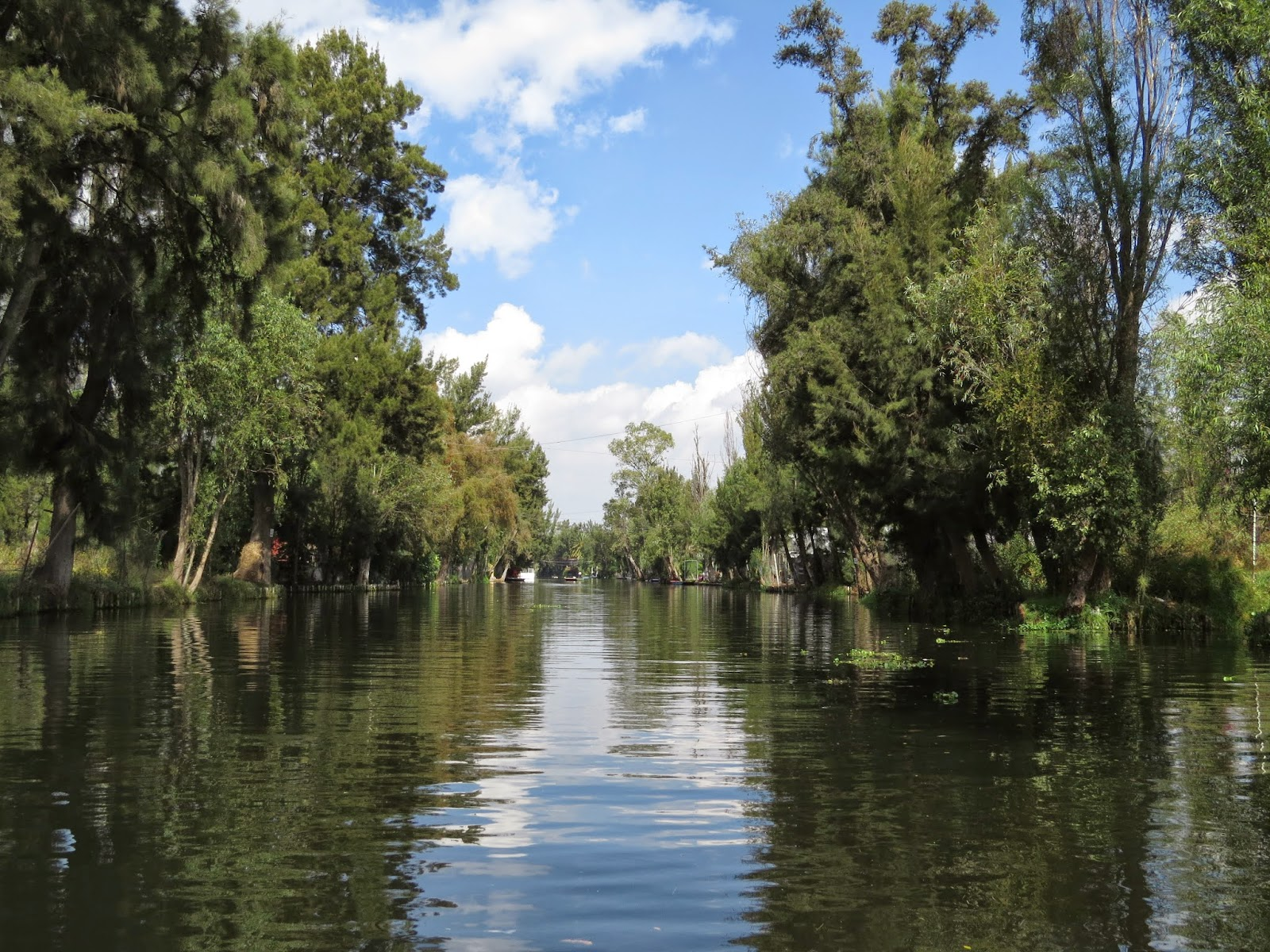 ecosystems components lake xochimilco mexico This species is known only from central mexico conservation action is focusing on raising the profile of lake xochimilco through ambystoma mexicanum.