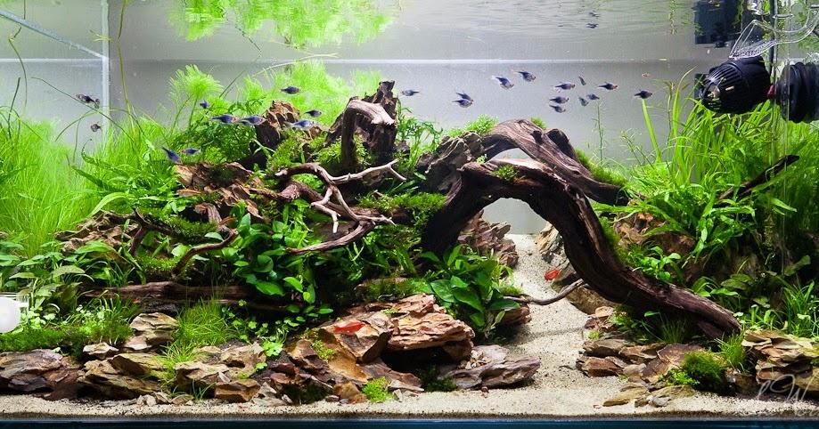 Jenis-Jenis Ikan Yang Cocok Untuk Mengisi Aquascape | Ikan ...