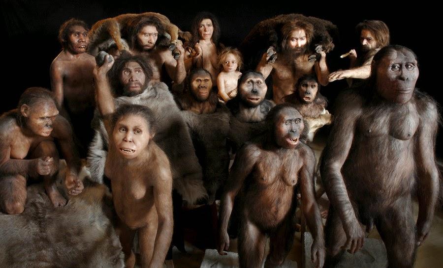 Human sex chromosome evolution