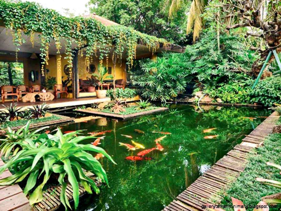 gambar rumah dengan taman gallery taman minimalis