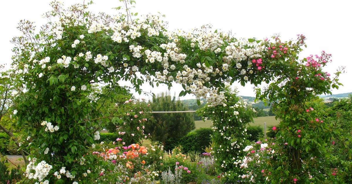 Roses du jardin ch neland rosier ch teau du rivau - Arche pour rosier grimpant ...