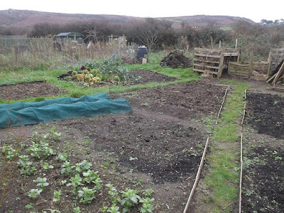 St Ives Cornwall Allotment - December 2015