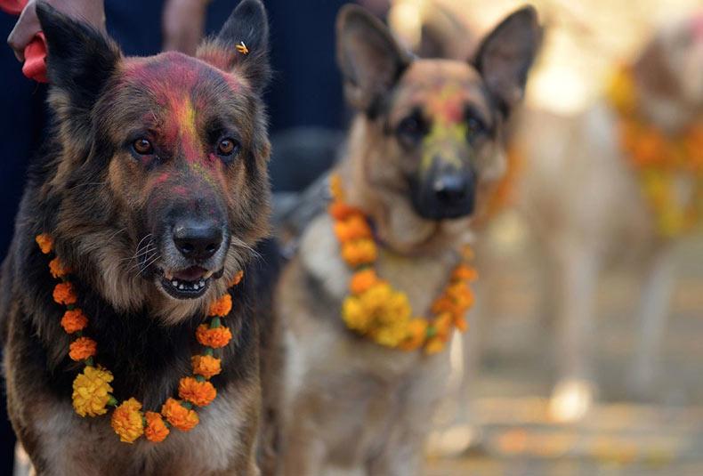 Existe un festival en Nepal cada año que honra a los perros por ser nuestros amigos