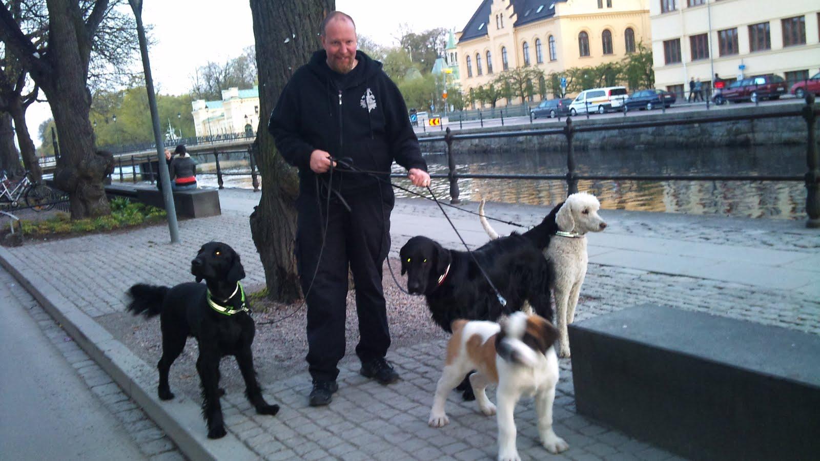 Image result for Saker att göra när man rastar hunden