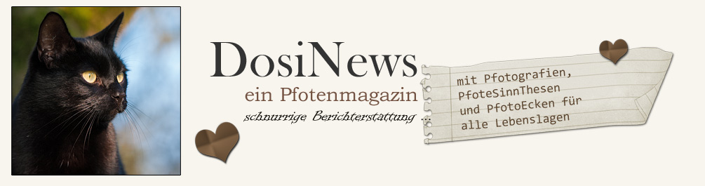 DosiNews