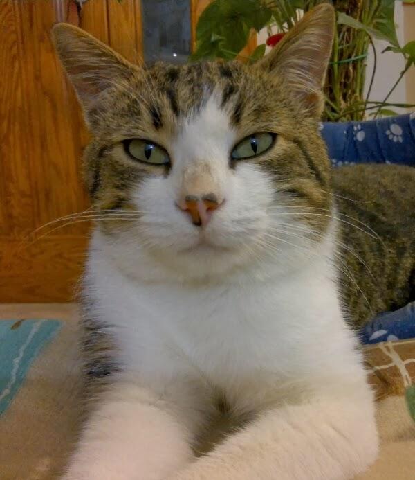 Il filo di mais di chiara gloria e daniela cucito for Cucito creativo gatti