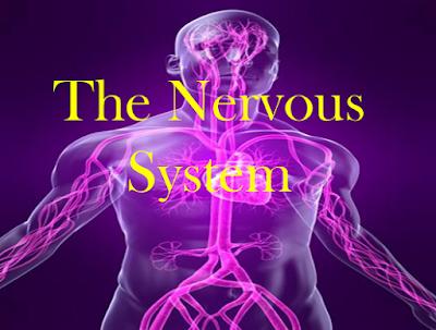 Mengenal Sekilas Sistem Saraf Pada Manusia