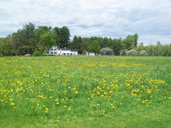 Homeland Farm in spring