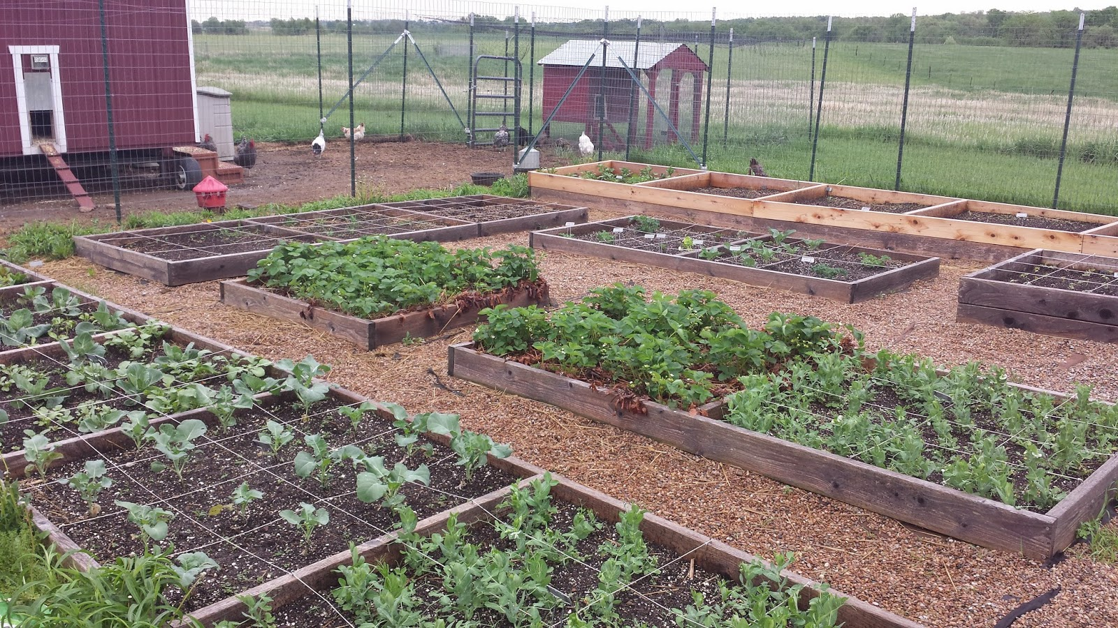 Kitchen Garden Farm Gust Front Farm