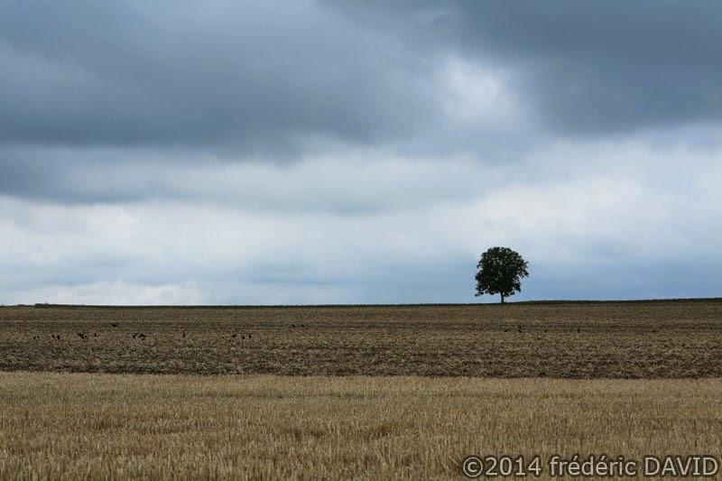 campagne champ arbre ciel nuages Seine-et-Marne