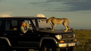 cheetah on front bonnet of jeep
