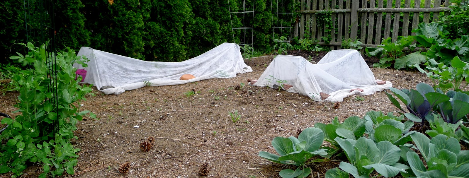 Row covers, organic pest control, urban farming