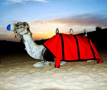O contraste do deserto