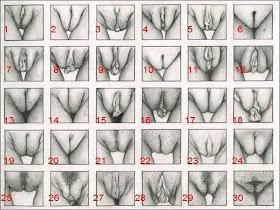 Ketahui Jenis-jenis faraj Wanita (18SX)