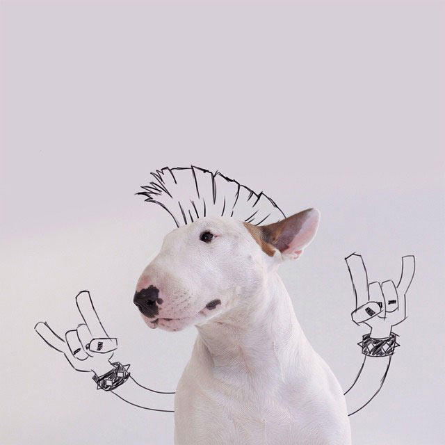 Perro mascota se convierte en descaradas obras de arte usando inteligentes bocetos de su dueño