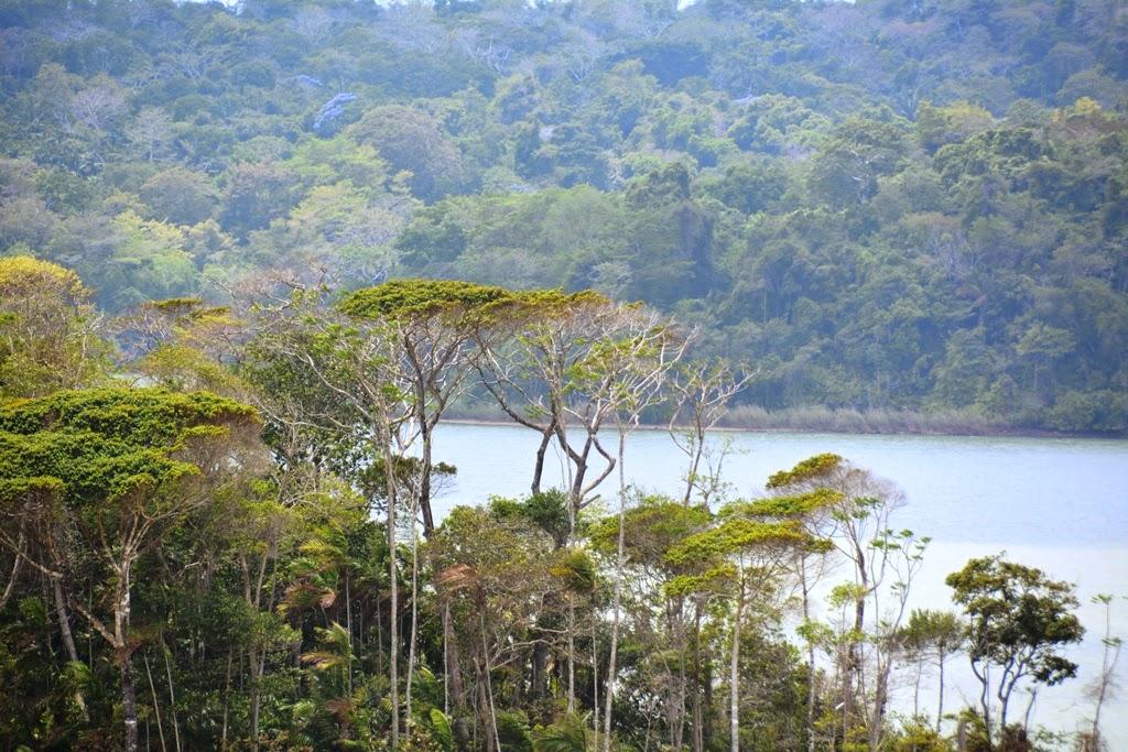 Gatun Lake Panama high trees