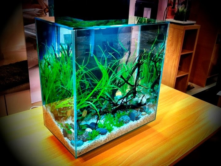 Fluval Edge 2 12 Gallon Size New Aquarium By Hagen Aquascape Freshwater Plants For Beginners
