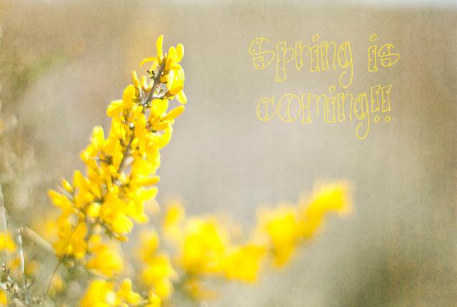 Flores amarillas en primer plano