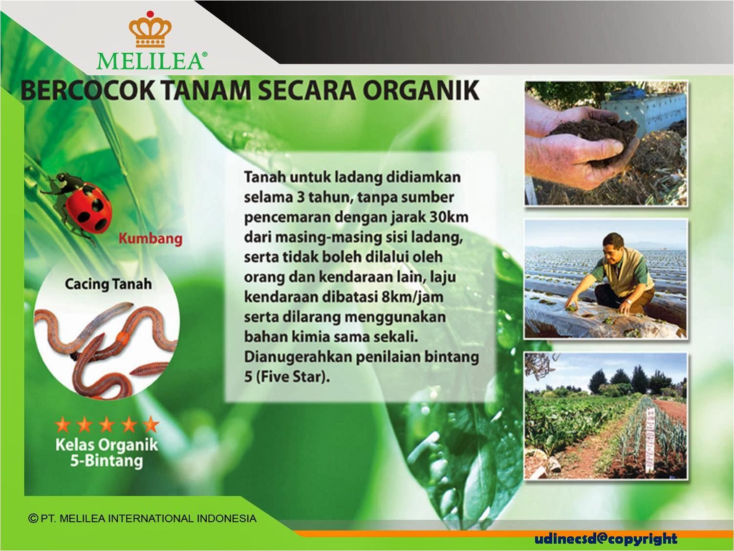 Bisnis Sembako Untuk Kesejahteraan Kita Susu Kedelai Bubuk Melilea Organik Serbuk Cara Bercocok Tanam Greenfield Organic