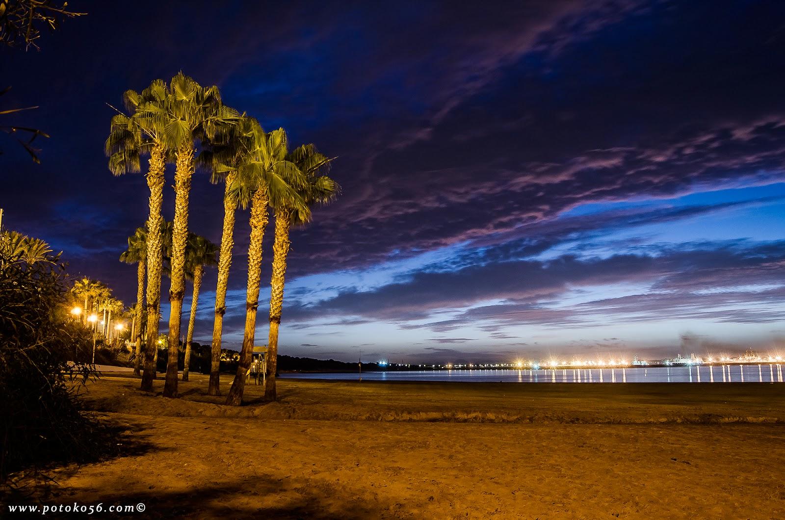 unas palmeras en la playa del Chorrillo Rota