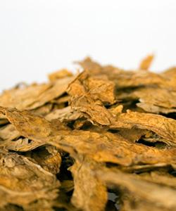 Curar Tabaco